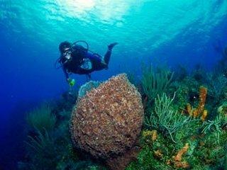 diving in Puerto Morelo's Reef