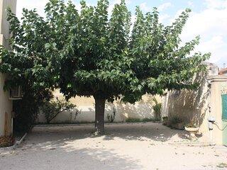 Le murier platane, dans un coin de la cour