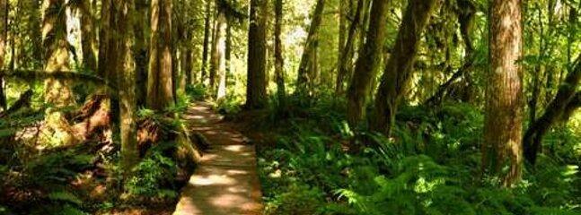 Path,Vegetation,Trail,Tree,Outdoors