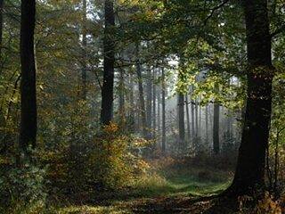 Balade en forêt de Brotonne