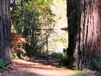 Sequoia Beach Dreamery, Cazadero, Vacation Rental
