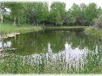 A large pond is in view right below the Barn - great for attracting wildlife!