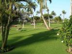 Maui Sunset 105A ~ 1 bedroom, 2 bath Ground Floor Condo!