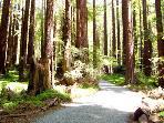 Austin Creekside Retreat, Sonoma County, CA