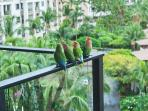 A Family of Love Birds Enjoying the Amazing Views at M511 Regal Mandalay