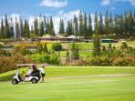 The Club House at Kapalua Bay Course and Tennis Club is set Amongst Cook Pines and Rolling Fairways