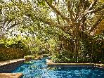 Pool and Banyan