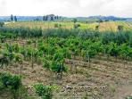 Vineyards at your doorstep