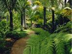 Prince Kuhio Garden Path
