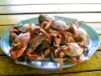 Enjoy fresh caught Crab Feast on Porch overlooking Assateague island VA  home of the Wildlife Refuge