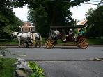 Carriage rides in lexington