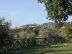 Assisi from the Olive Grove