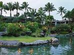 palms trees surround you as you enjoy our lagoon pool