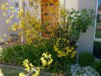 Spring blooms at Tea Tree Manor - Kangaroo Paws