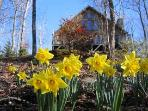 Spring Blossoms and Cabin