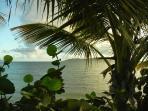 Solitude Bay Buck Island