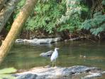 Riverwalk Trail located at Leconte Events Center..Beautiful Pet Friendly Trail