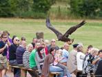 International Birds of Prey Centre makes a fab outing