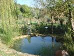 The hog wallow: natural mineral spring