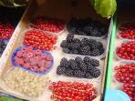 Frutti di Bosci