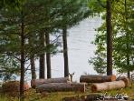 Enjoy the firepit and the wildlife (deer at Breezy fire pit: photo by Gabriel Esler)