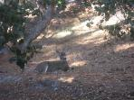 Our Neighbood Friends!  Breakfast with Bambi!