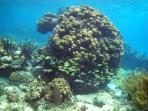 Snorkeling at the Rum Point Boulder Coral Garden just out the door
