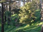 Buena Vista Park Walking Trails just a 20 minute walk from YourHomeInSanFrancisco