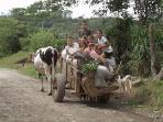 Children on their way home