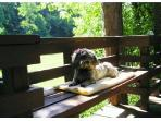 Little Itzy takes a sunbath on the deck.