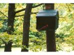Our bird feeder is one of our most popular features.