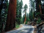 At the entrance of Sequoia National Park