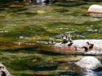 Wildlife surrounds us; see www.theriverjewel.com