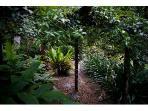 Rainforest walk in Casa Blanca's gardens