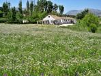 Spring time at Finca Retama holiday homes. Great time to visit Ronda in Andalucia