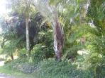 One of mamy exotic,tropical palm gardens on our estate