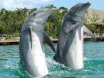 Dolphins at the PA marina