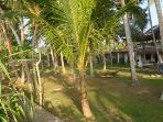 gardenside1