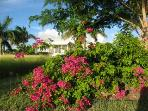 Looking from the pool to the house through the bougainvillea