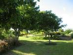 Mahogany and neem trees lend some shade