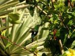 Hummingbird amid the agaves