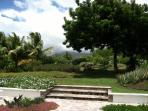 The patio and been tree, with Mt Nevis hidden by clouds