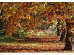 Autumn colours in Parwich