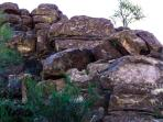 Picture rocks with petroglyphs, about 5 mintues from our home