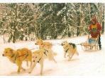 dog sled racing at winona