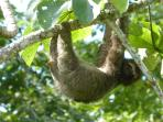 baby sloth born 2 years ago on reserve