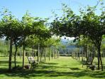 Sit among the kiwi vines