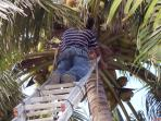 worker removing the coco's
