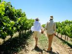 Walk in the vineyards around Shady Oaks