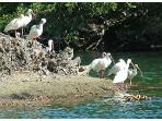 Wildlife abounds on the island. It is on the migratory routes of many rare and unusual species